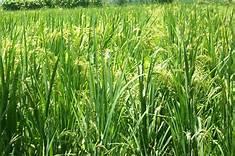 Les députés préoccupés par les questions agricoles